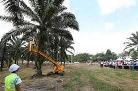Minyak Kelapa Sawit Terkini sabit elektrik e cutter boleh tuai kelapa sawit setinggi 30 kaki