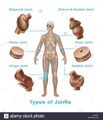 Joints Human Anatomy Joint Replacements In The Human Body Types Of Joint Replacements