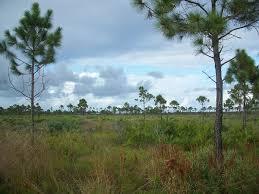 Jensen Beach Florida Map by Savannas Preserve State Park Wikipedia