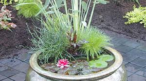 Container Water Gardens Pond In A Pot U2014 Saturday Magazine U2014 The Guardian Nigeria Newspaper