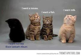 Heavy Metal Memes - black sabbath cat heavy metal know your meme