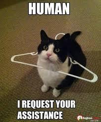Cat Internet Meme - cat request human assistance funny meme pics bajiroo com