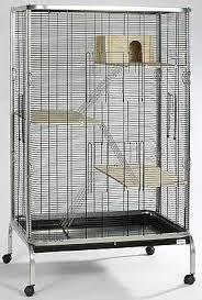 gabbie scoiattoli la gabbia adatta al tamia pets