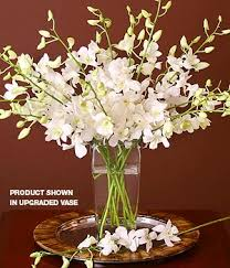 Orchid Cut Flowers - white cut orchids spray jfk inspiration challenge pinterest