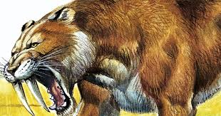 reason sabre toothed tiger ice age extinction revealed