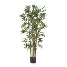 buy silk trees from bed bath beyond