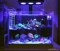 led lights for coral tanks marine reef tank led light coral grow white blue aquarium fish tank