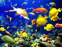 global ornamental fish market 2017 haojin oasis fish farm aqua