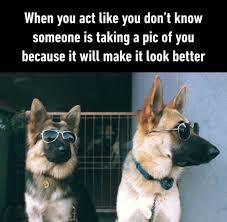 Dog With Glasses Meme - dog with glasses meme 28 images menswear dog gifs find share