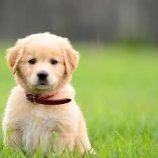 puppy presents puppypresents