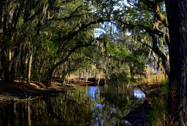 South Carolina scenery images Santee coastal scenic sunday middle of everywhere jpg