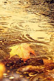 imagenes animadas de otoño 32 imágenes animadas hojas de otoño 1000 gifs gif pinterest