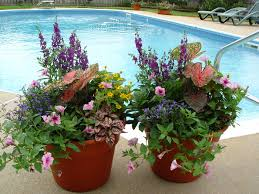 container gardening vegetables and flowers home outdoor decoration