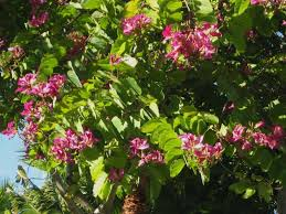 future plants by randy stewart tropical and climate legume trees
