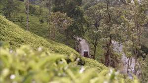 ceylon tea trails sri lanka youtube