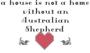 h cross australian shepherds australian shepherd this house is run by a australian shepherd