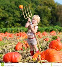 pumpkin screensavers laughing small playing on pumpkin field stock photo image
