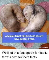 Ferret Meme - 25 best memes about ferret ferret memes