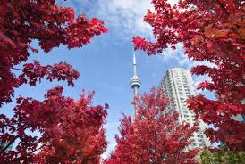 416 weekend things to do in toronto thanksgiving edition