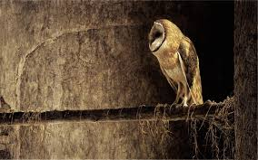 Wallpaper Barn 46 Barn Owl Hd Wallpapers Backgrounds Wallpaper Abyss