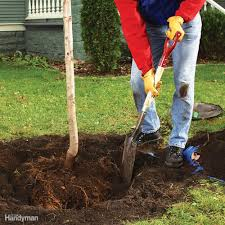tips for trouble free tree planting family handyman