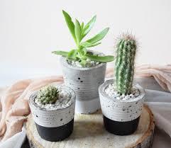 Concrete Planters Potted Cacti And Succulents In Handmade Concrete Pot U2013 Wild North