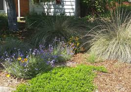 when to prune native plants irrigating and maintaining native plants the real dirt blog