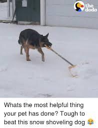 Shovel Meme - 25 best memes about shovel dog shovel dog memes
