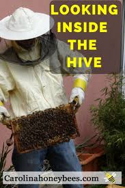 793 best bees images on pinterest bee keeping honey bees and