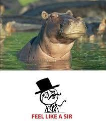Hippo Memes - 15 hilarious hippo memes i can has cheezburger