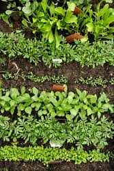 how to grow fresh delicious vegetables no matter where you live