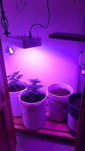 first indoor micro grow grasscity forums