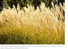 the year of ornamental grasses