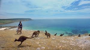 kangaroo island south australia 360 video tourism australia