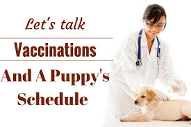 puppy vaccination schedule why which ones and when