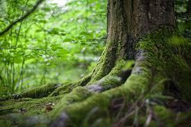 1000 amazing trees photos