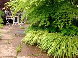 japanese garden ideas of japanese mountain grass home dezign