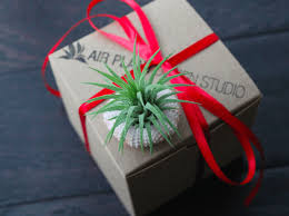 s day air plants unique gifts for air plant design