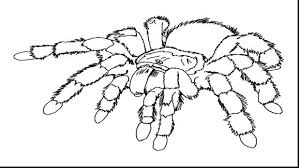coloring pages free printable spiderman coloring pages free