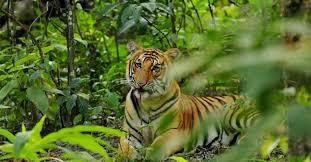 Bardiya jungle safari 03 nights 04 days wildlife tour prices