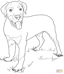rottweiler coloring pages rottweiler puppy coloring free