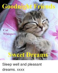 Sweet Dreams Meme - goodnight friends cat whispers sweet dreams sleep well and