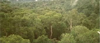 canopy amazon rain forest amazon
