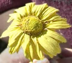 preserving flowers eek preserving flowers