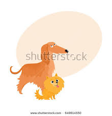 afghan hound walking afghan hound puppy stock images royalty free images u0026 vectors
