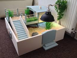 Pictures Of Tables Best 25 Tortoise Table Ideas On Pinterest Tortoise Habitat