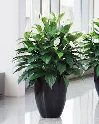 artificial plants lifelike spathiphyllum silk floor plant at petals