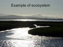 ecosystem power point by matthew burkhardt period 4 science mr