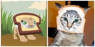 Cat Breading Meme - animal jam glory bread hat