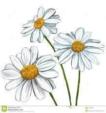 daisy sketch watercolor google search tattoo anyone